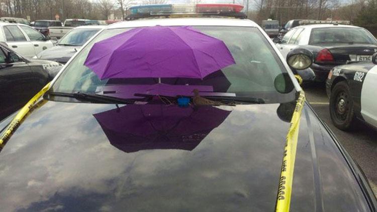 Agentes de policía ponen un paraguas morado en su vehículo por una SORPRENDENTE razón