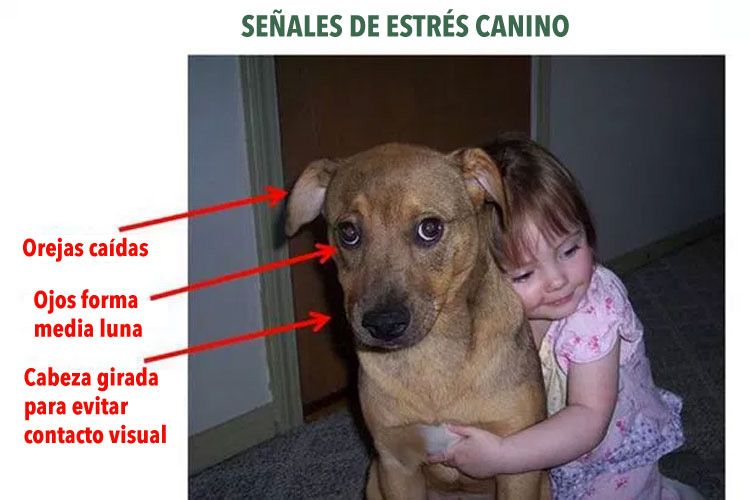 Deja de abrazar a tu perro - los psicólogos de animales dicen que lo odia