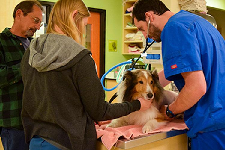 A un minuto de ser sacrificado, los veterinarios hacen un descubrimiento sorprendente