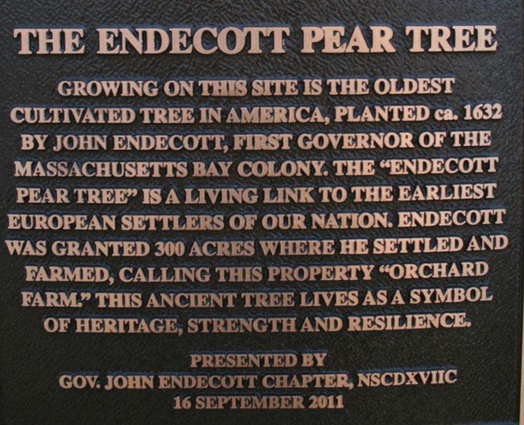 Este árbol ha estado protegido durante décadas. Mira el secreto que hay detrás de él...