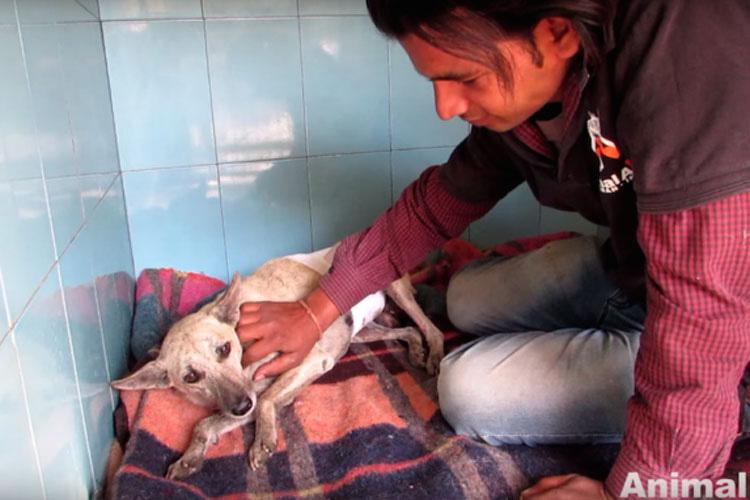Descubren a un perro moribundo pidiendo, mira lo que pasa cuando llegan hasta él...