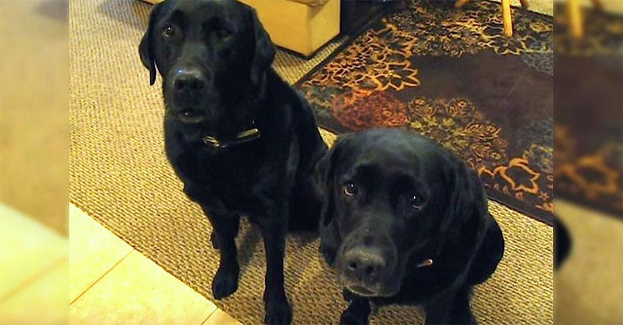 Su dueña pregunta: ¿Quién ha robado la galleta? Ahora mira al perro de la izquierda...