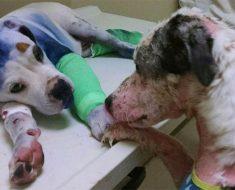 Este perro consuela a un amigo que está pasando por un momento difícil. Esta es su historia