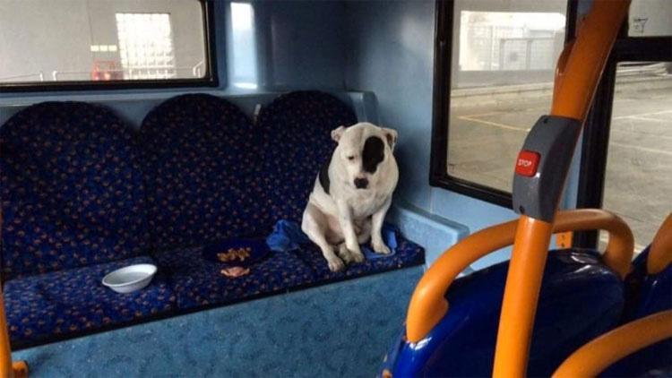 Era sólo un paseo normal en autobús hasta que el conductor lo ve por el espejo retrovisor...