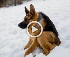 Se llama Quasimodo, y es un perro muy diferente. ¿Serías capaz de quererlo?