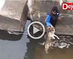 Un hombre rescata a un perro de una situación difícil, mira lo que hace tras ser rescatado