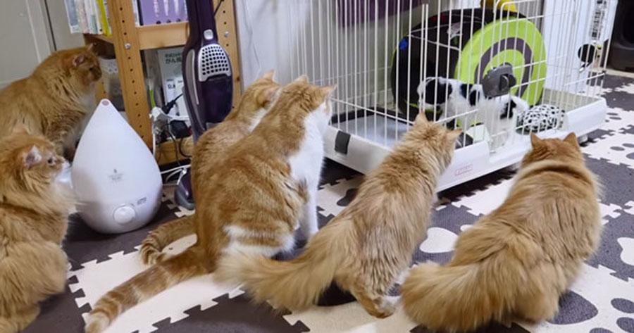 Así se reaccionaron los gatos de la familia con la llegada de un nuevo cachorro...
