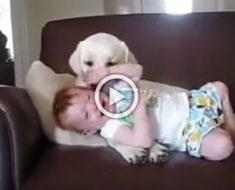 Nunca dejes a tus hijos solos con tu perro, puede pasar esto...