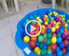 Papá pone una pequeña piscina de bolas para los niños. Pero mira que aparece en su lugar...