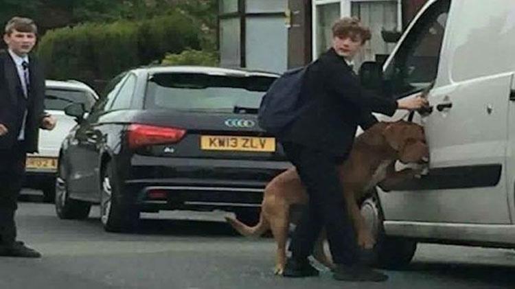 Dejó a su perro en el coche durante unos minutos. Podría haber muerto de no ser por esto... 3