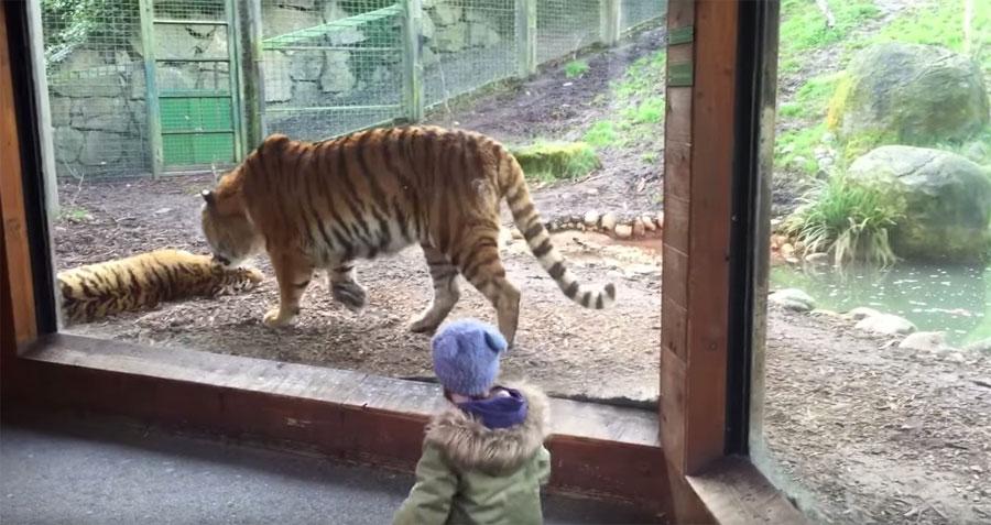Nunca despiertes a un tigre de una siesta...