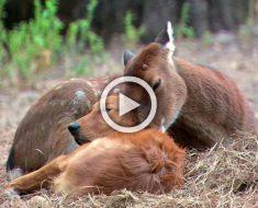 Todo el mundo de este planeta tendría que ver este video de animales de 1 minuto