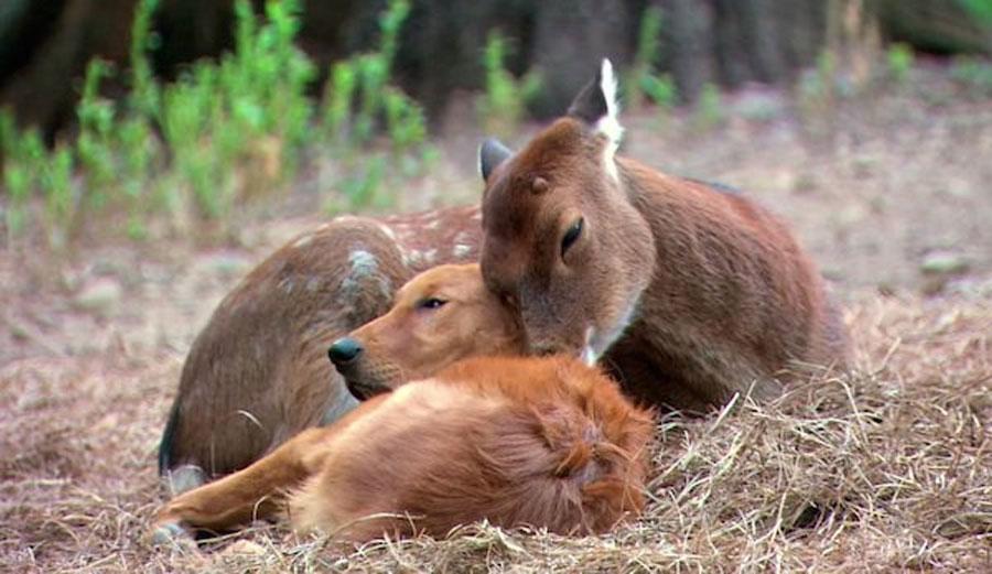 Todo el mundo de este planeta tendría que ver este video de animales de 1 minuto 1