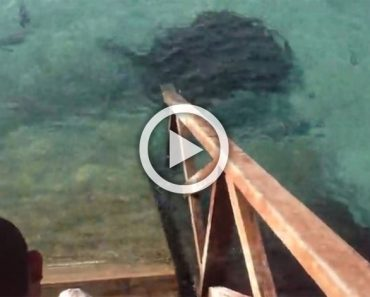 Unos turistas ven a un hombre alimentar a los peces. Entonces ven una enorme sombra en el agua...