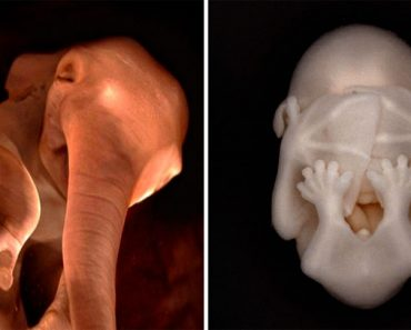 15 fotografías completamente sorprendentes de animales en el útero. Atención a la #8