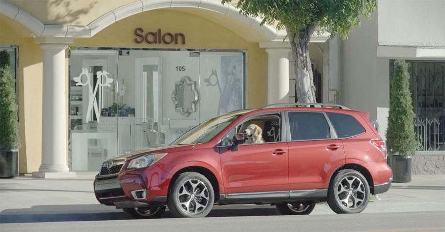 Un perro grande espera pacientemente en un coche. A continuación, mira quién sale del salón ...