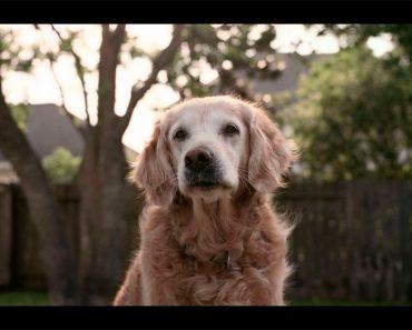 El último perro conocido del 9/11 ha fallecido. Aquí están todas las cosas que hizo