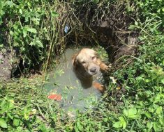 cachorro-pozo-drenaje-1