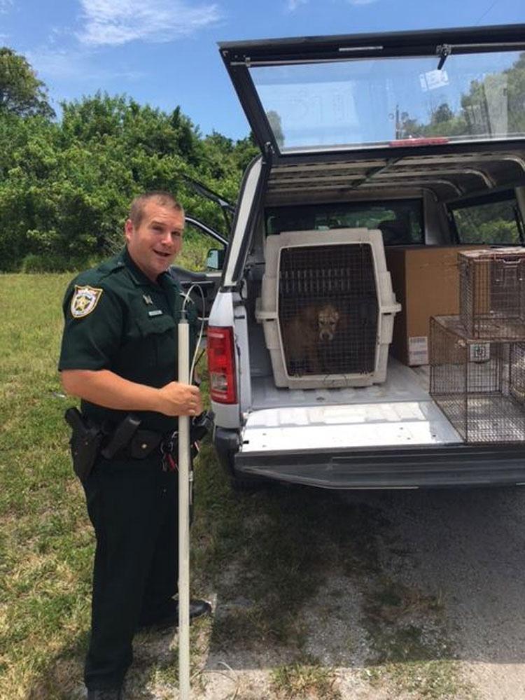 Un policía oye gemidos en un solar vacío y encuentra a un asustado cachorro. ¿Qué hace después?