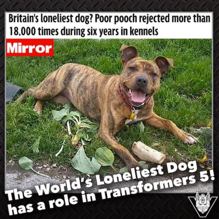 Este perro fue rechazado 18.000 veces. Hasta que una estrella de Hollywood hizo esto ...