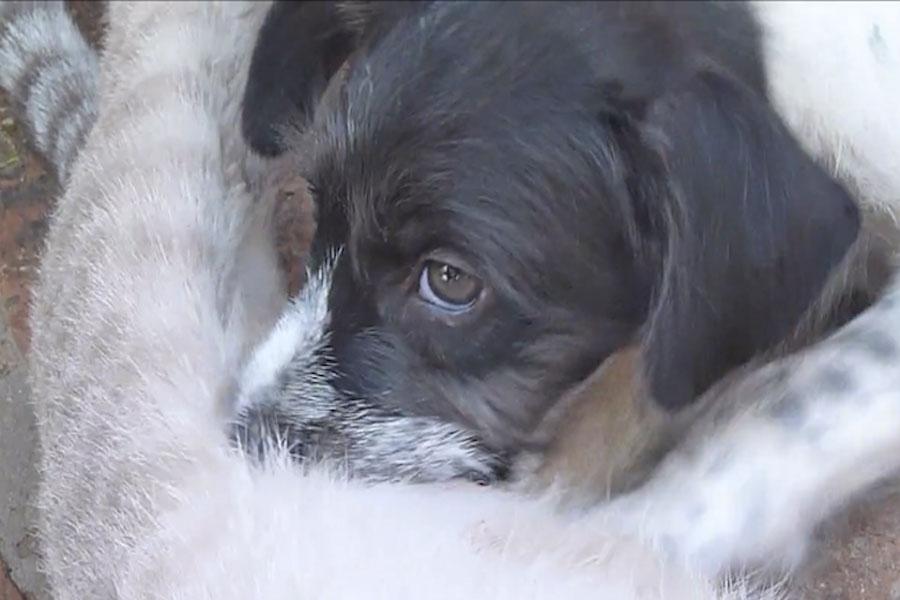 La madre de este cachorro murió. Te sorprenderás cuando veas a su nueva madre... 1