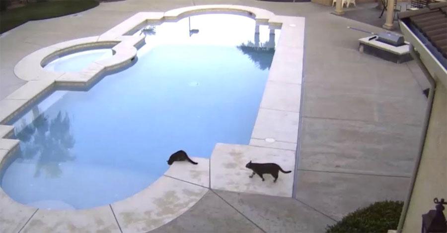 Tenía miedo a los ladrones, así que puso una cámara. Ahora mira a los 2 gatos negros ...