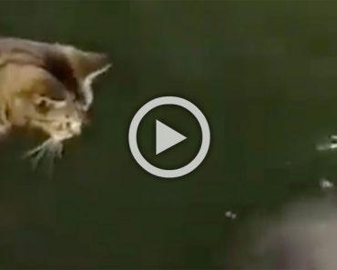Este gato ve algo en el agua. Ahora observa su reacción al darse cuenta de lo que es ...