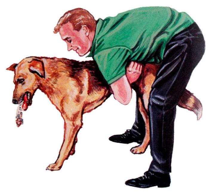 Si tu mascota se está asfixiando este simple truco puede salvar su vida