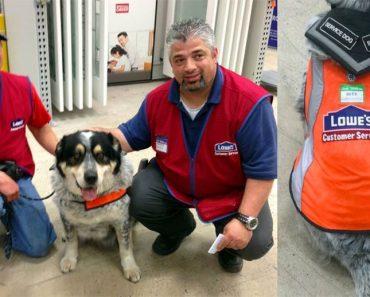 Este hombre no podía encontrar trabajo a causa de su perro de servicio, hasta que sucedió esto...