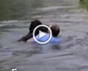 Este hombre saltó al recinto zoológico para salvar de un ahogamiento a un chimpancé