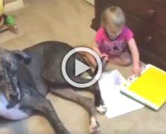 Graba a su perro gigante acostado al lado de su pequeña hija. ¿2 segundos más tarde? ¡Adorable!