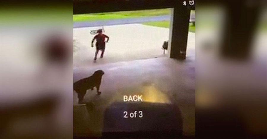 Este niño es atrapado con la cámara en el garaje de un extraño haciendo esto a su perro...