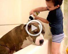 Vierte champú sobre su 'hermano' sucio. Pero sigue viendo al perro ... ¡ADORABLE!
