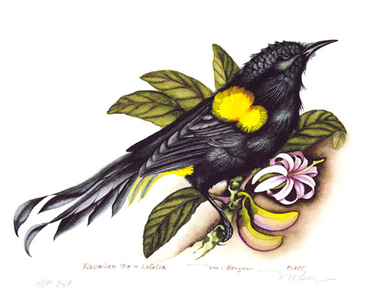 La misteriosa canción de esta fascinante ave extinguida no se parece a nada que hayas escuchado antes