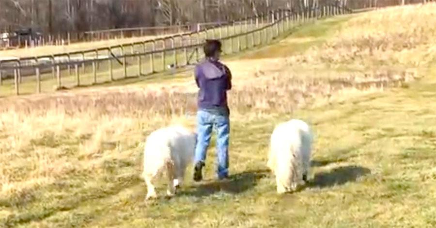 Va a dar un paseo con sus dos grandes perros. Pero mira quién les sigue detrás ...