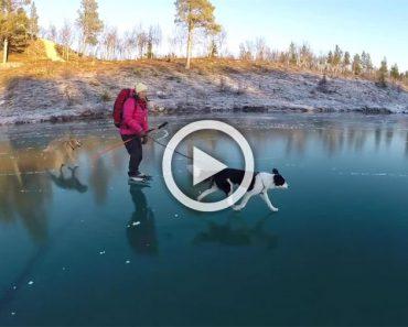 Se va con su perro hasta un lago helado, hasta que mira hacia abajo y no cree lo que ve...