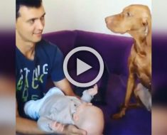 Está celosa del recién nacido. ¿Pero qué pasa cuando papá da un beso al bebé? ¡DIVERTIDÍSIMO!
