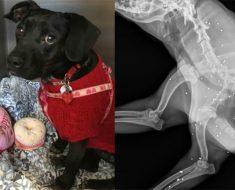 Este tímido perro oculta el más triste secreto dentro de su cuerpo. ¡Terrible!