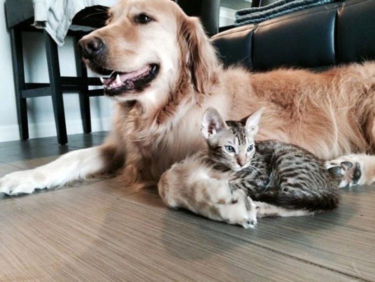 Su perro no está sordo, pero no quiere venir cuando se le llama. Hasta que se da cuenta de la razón
