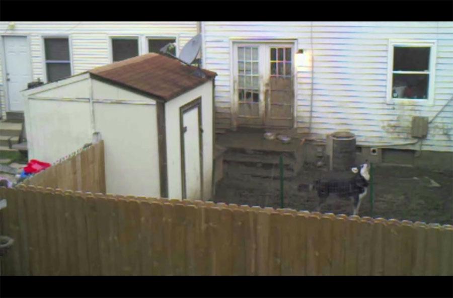 Este perro se queda solo en el patio, pero ATENCIÓN a lo que hace su dueño ...