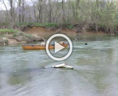 Un heroico perro Labrador rescata a dos perros atrapados en una canoa... ¡Impresionante!