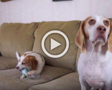El perrito de la izquierda tiene una curiosa 'habilidad'... ¡es un divertido ladrón! Compruébalo