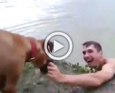 Este perro no deja la mano de su dueño. Cuando muestra la razón es... ¡INCREÍBLE!
