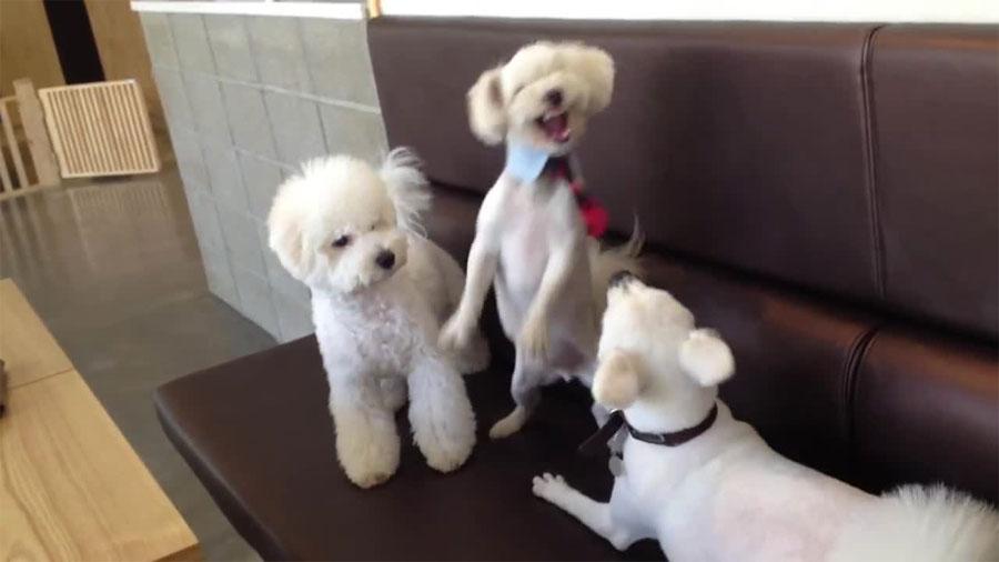 Así es como un perro responsable termina una fuerte pelea entre hermanos... ¡Y les regaña!