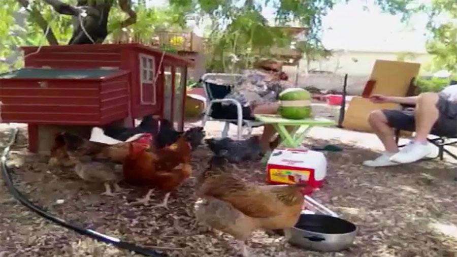 Estaban con sus tranquilas gallinas hasta que de repente algo EXPLOTA y ocurre esto... ¡Hilarante! 1