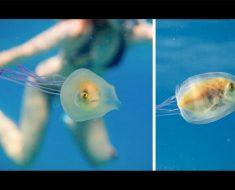 Este fotógrafo captó este pez haciendo algo realmente EXTRAÑO. ¿Puedes verlo?