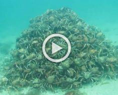 Unos buzos se encontraron con ESTO en una inmersión rutinaria... ¿Qué es lo que era?