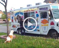 El camión del helado se detiene, ahora atención al pit bull... ¡DIVERTIDÍSIMO!