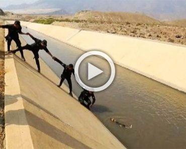 Policías formaron una cadena humana para salvar a un perro atrapado en un canal