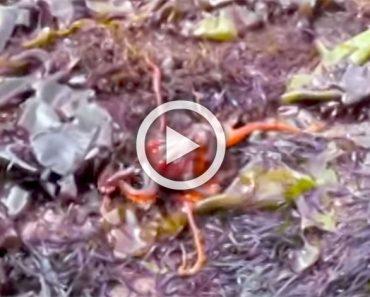 Una familia encuentra una extraña mancha roja entre la hierba. 30 segundos más tarde gritan...